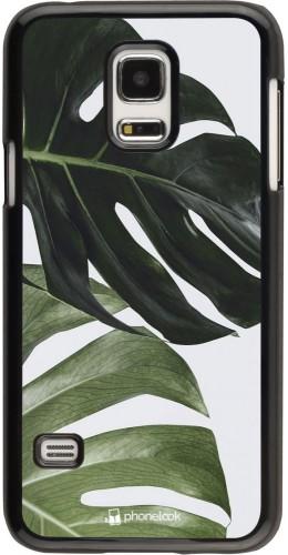 Coque Samsung Galaxy S5 Mini - Monstera Plant